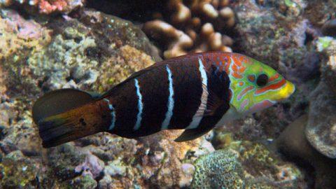 Bereits über eine Million Unterschriften für den Schutz des Great Barrier Reef