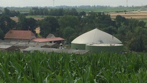 Strohhalm für Biogas