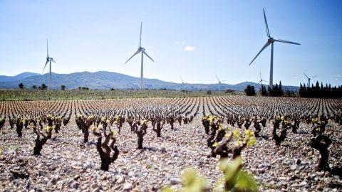 Die Welt wird erneuerbarer – aktuelle Zahlen zur globalen Energiewende