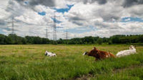 Bayerns Regierung weiterhin ohne Energiekonzept