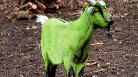 Der grüne Sündenbock