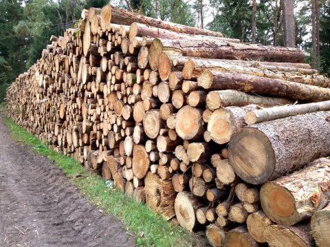 Holz wächst zu langsam, um klimaneutral zu sein